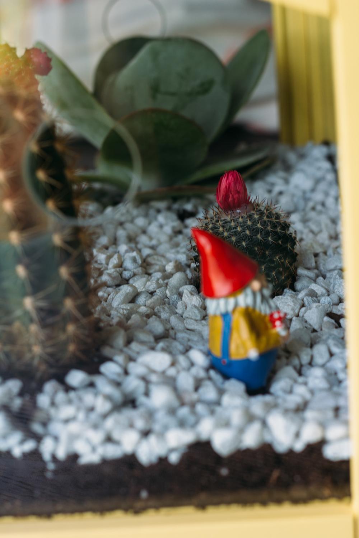 cactus-22.jpg