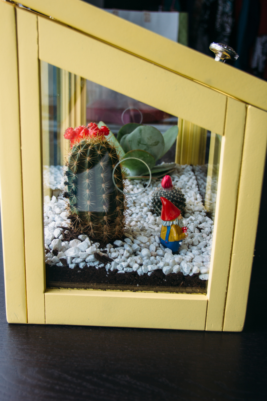 cactus-26.jpg