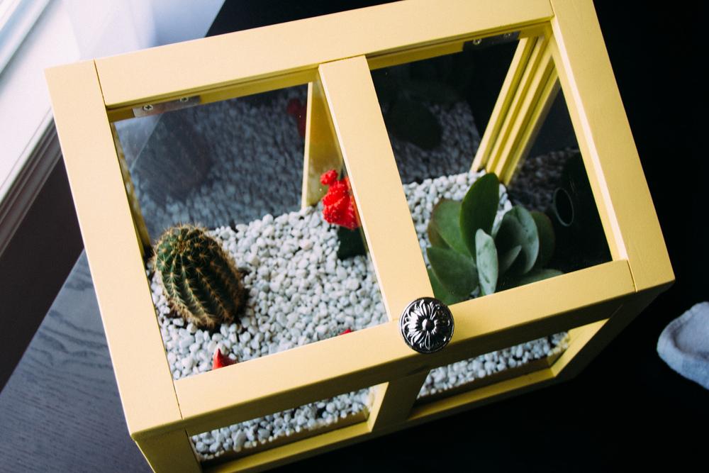 cactus-29.jpg