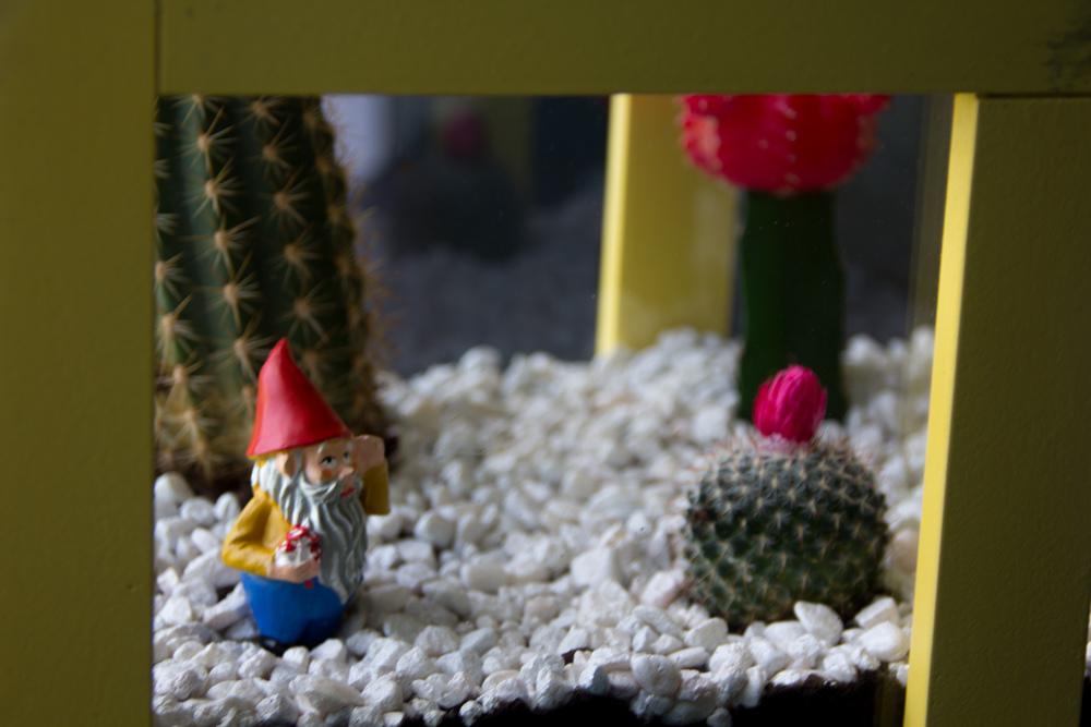 cactus-32.jpg