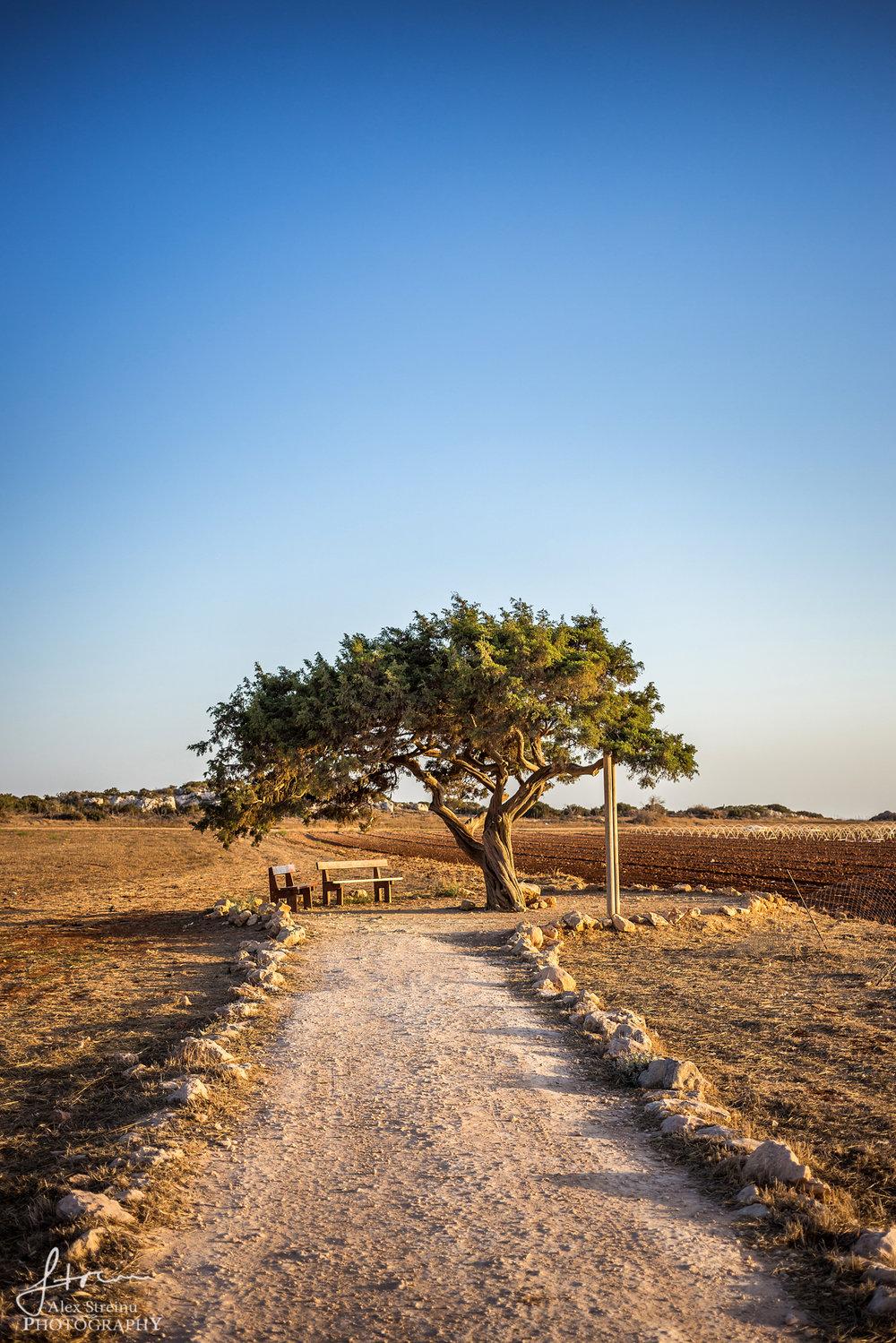 Landscape by Alex Streinu (9).jpg