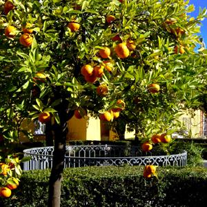 Oranger 300.jpg