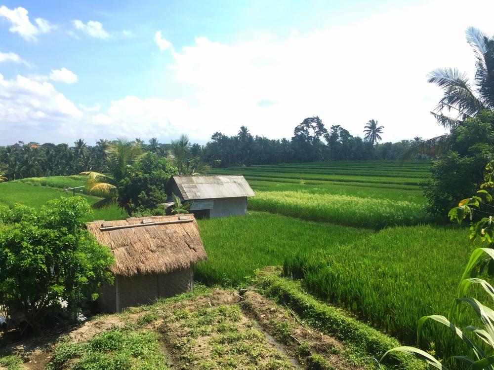 8. Lunch at Sari Organik, Ubud