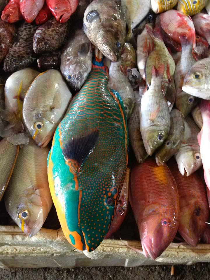 12. Fish Market Tour