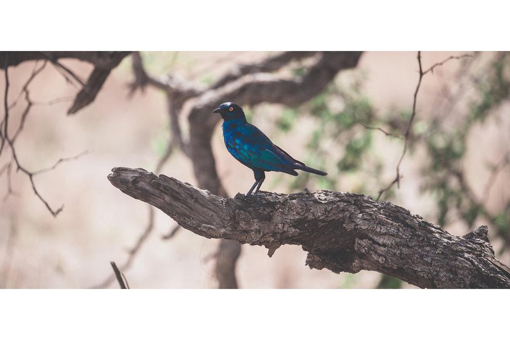 the-blue_24394500376_o.jpg