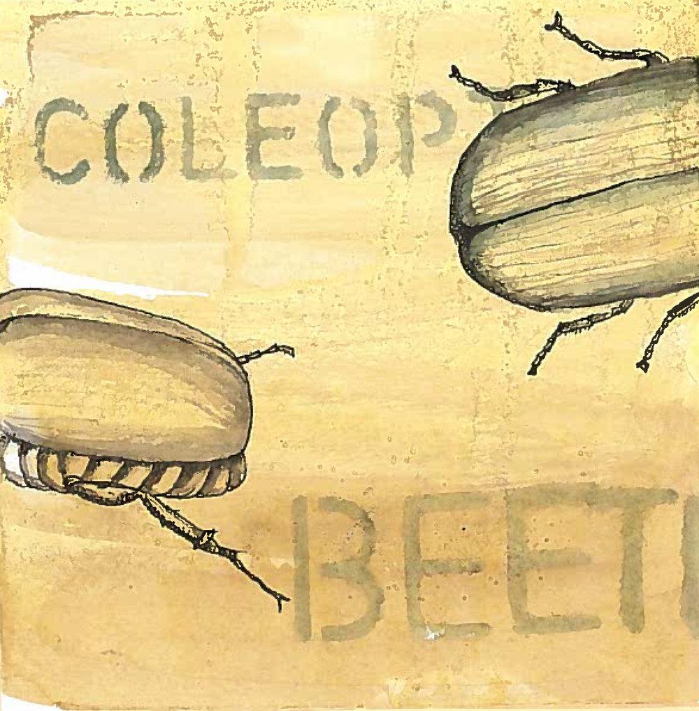 2_beetle1.jpeg