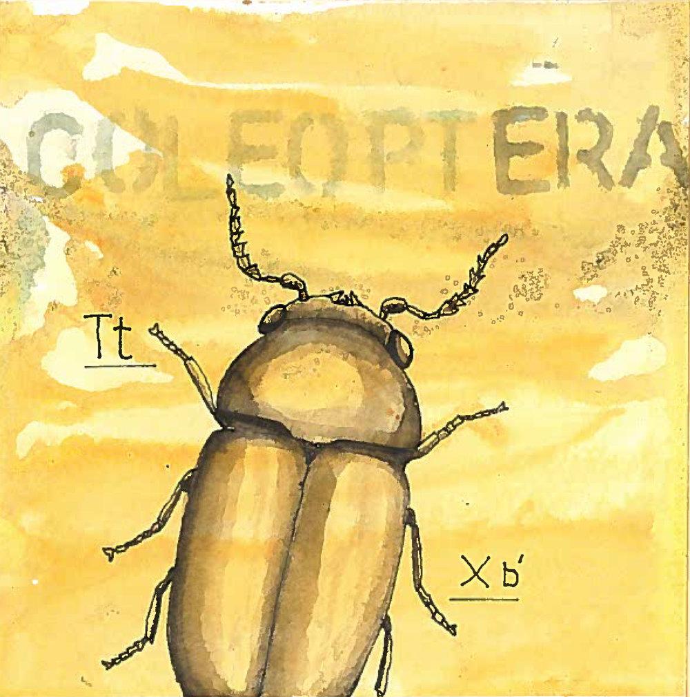 2_beetle.jpeg
