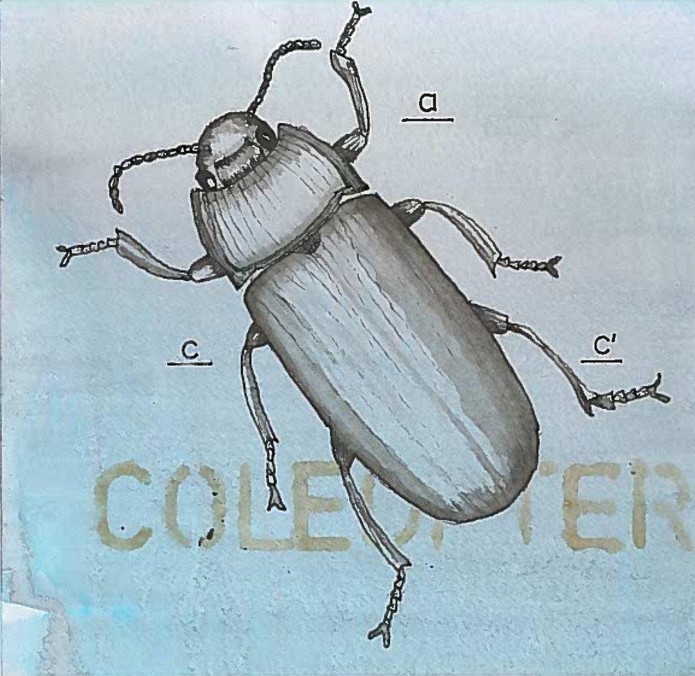 2_beetle3.jpeg