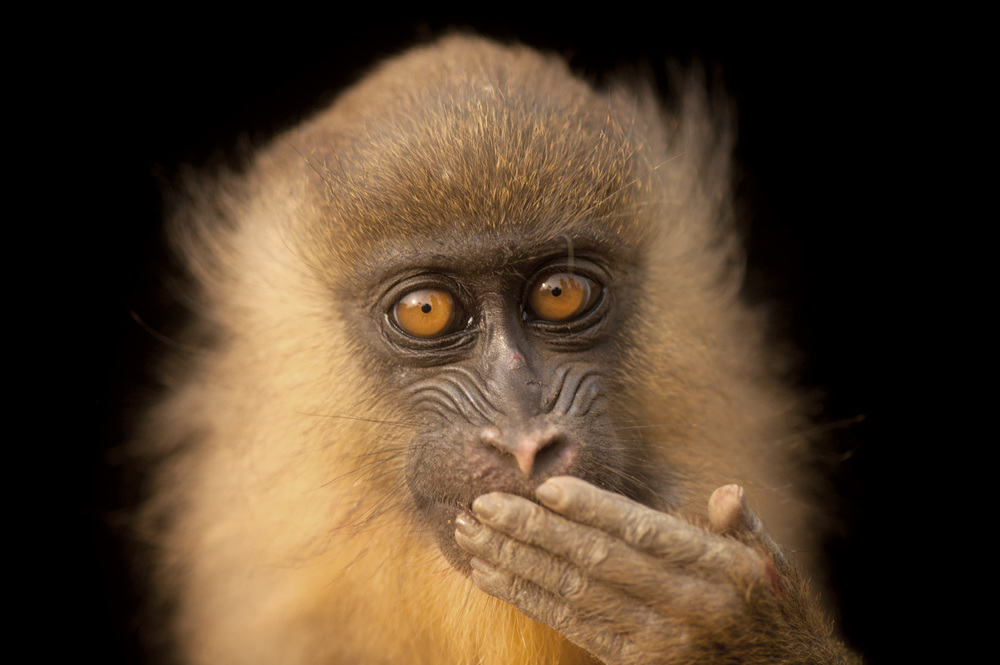 Joel Sartore, The Photo Ark