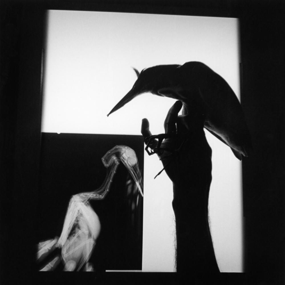 Iturbide_Radiografía de un pájaro, Oaxaca, 1999.jpg