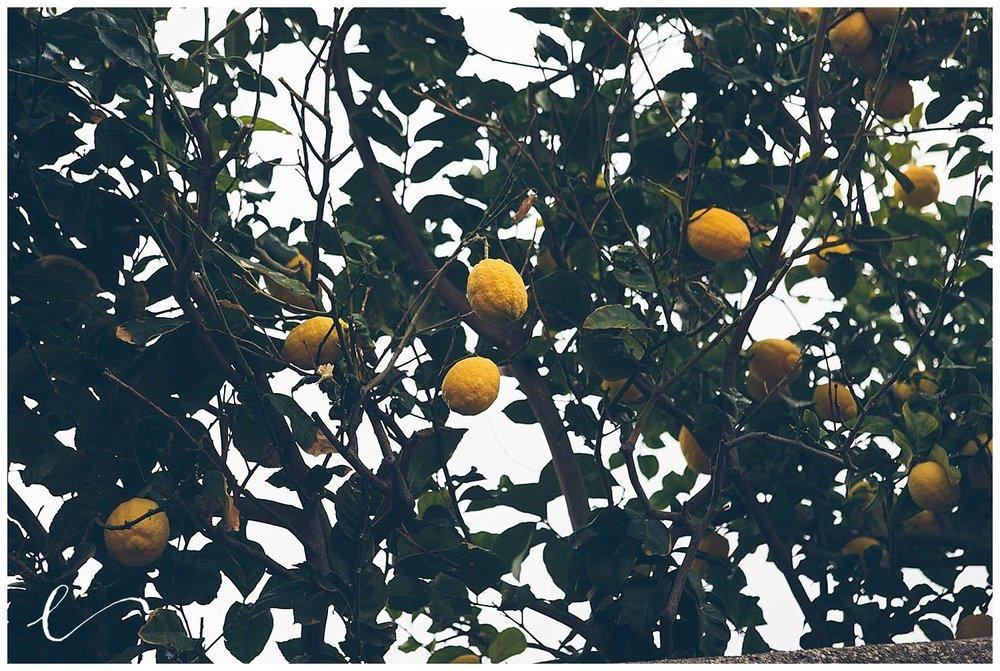 limoni liguria
