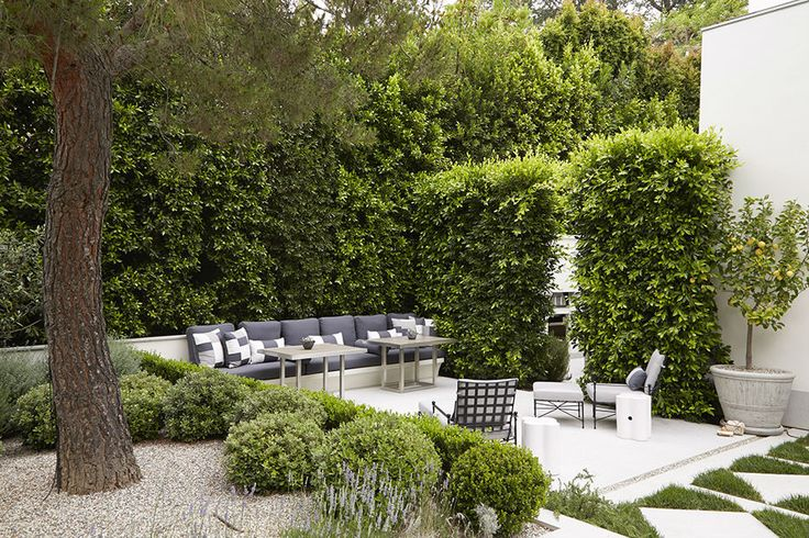 How beautiful is this backyard? Scale plays a big role here. Notice the height on the greenery and the architecture of the concrete and grass pads. Simple boxwoods and a potted lemon tree. The furniture is a mix of materials and traditional versus contemporary.