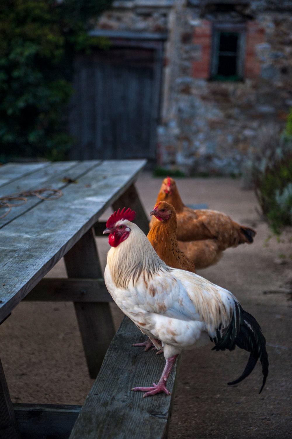 Trill-Farm,-Axminster-(3).jpg