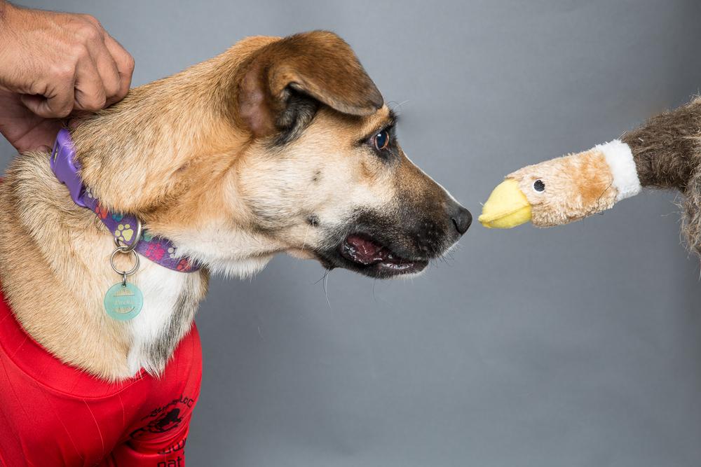hellosolphoto guadalajara perros1