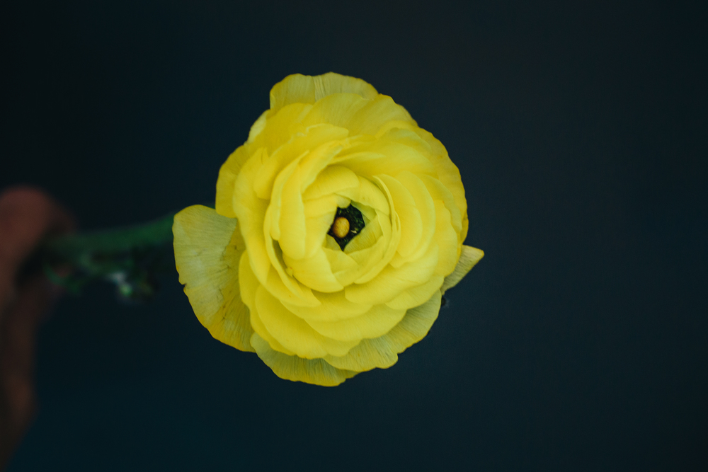 hellosolphoto-fotografia-bodas-flores-8