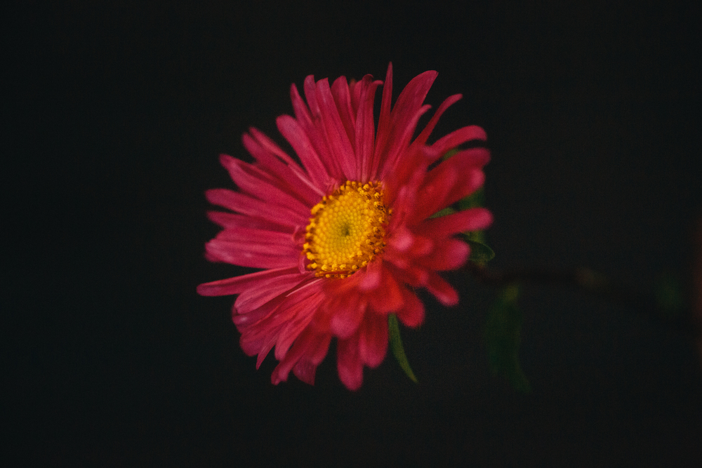 hellosolphoto-fotografia-bodas-flores-9