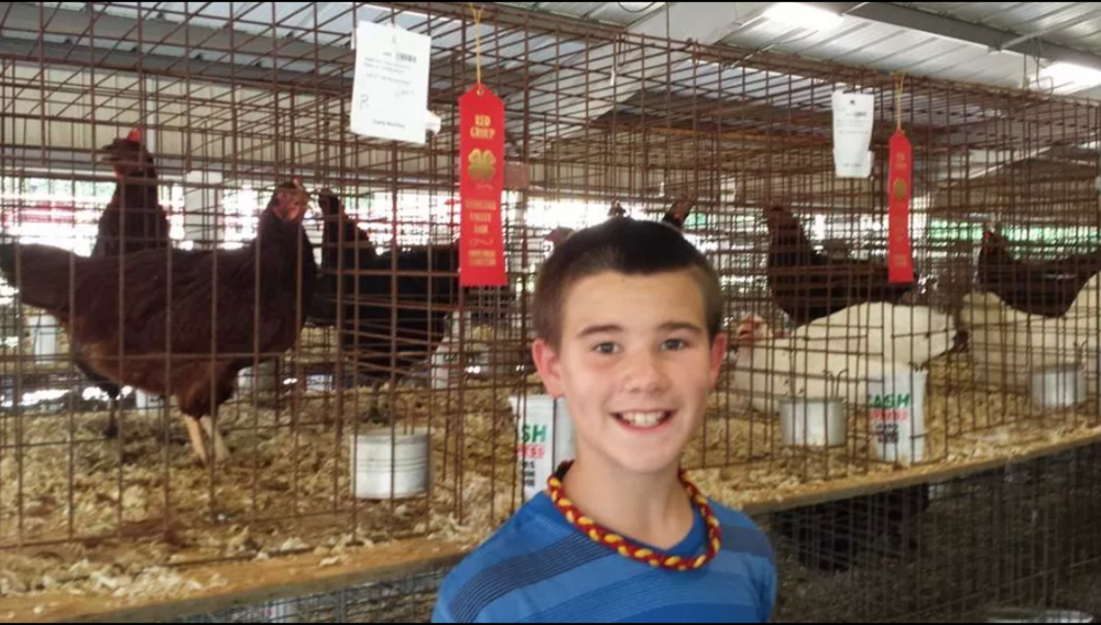 4-H'er Lane Atchley with his big wins at the 2014 TVA&I Fair.   Lane is a 5th grader at Carter Elem.  His Rhode Island Reds and White Rocks both received 2nd Place at the TN Valley Fair.  Check out all of his ribbons he took home!