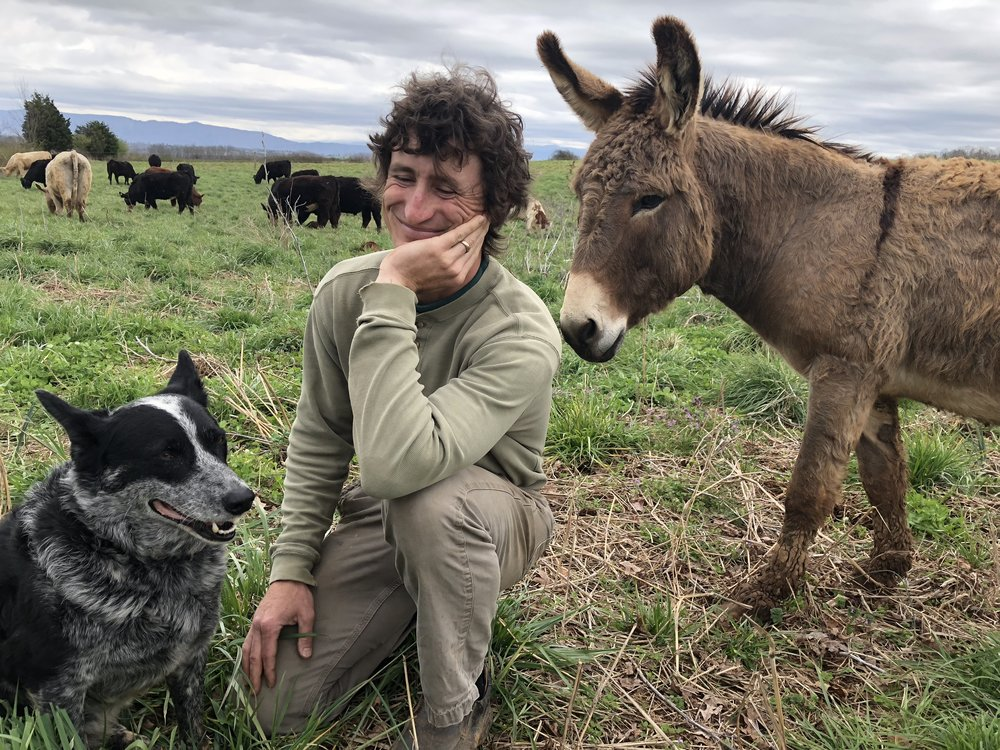 "Aussie the dog (you can hear him breathing during the podcast) known also as ""Minister of Bovine Affairs"" with Chris Burger (Proprietor or  Century Harvest Farms , Greenback, Tennessee)."