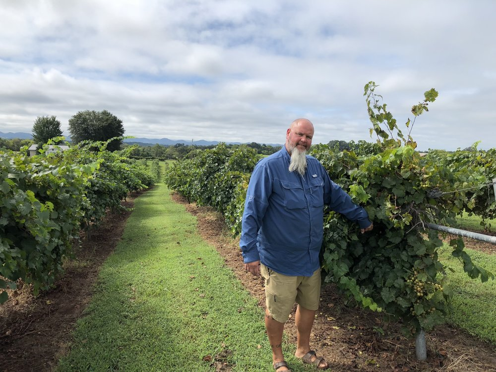 This is JD Dalton, Vineyard Manager at  Tsali Notch Vineyard . They have over 200 rows of Muscadine Grapes growing on the Vineyard, makers of wine, and value added products such as jams and jelliies. They will be hosting the National  Muscadine Festival  the last full weekend of September (2018).