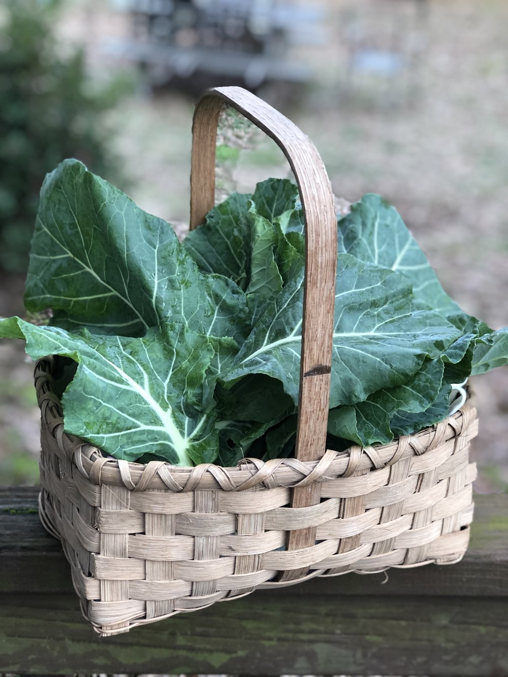 Collard greens in a basket my Grandfather bought from the square in Canton, Mississippi nearly 30 years ago. Photo by Amy Campbell.