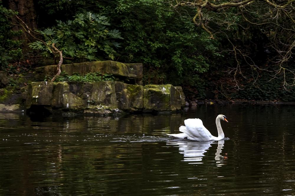 Swan'2C Dublin.jpg
