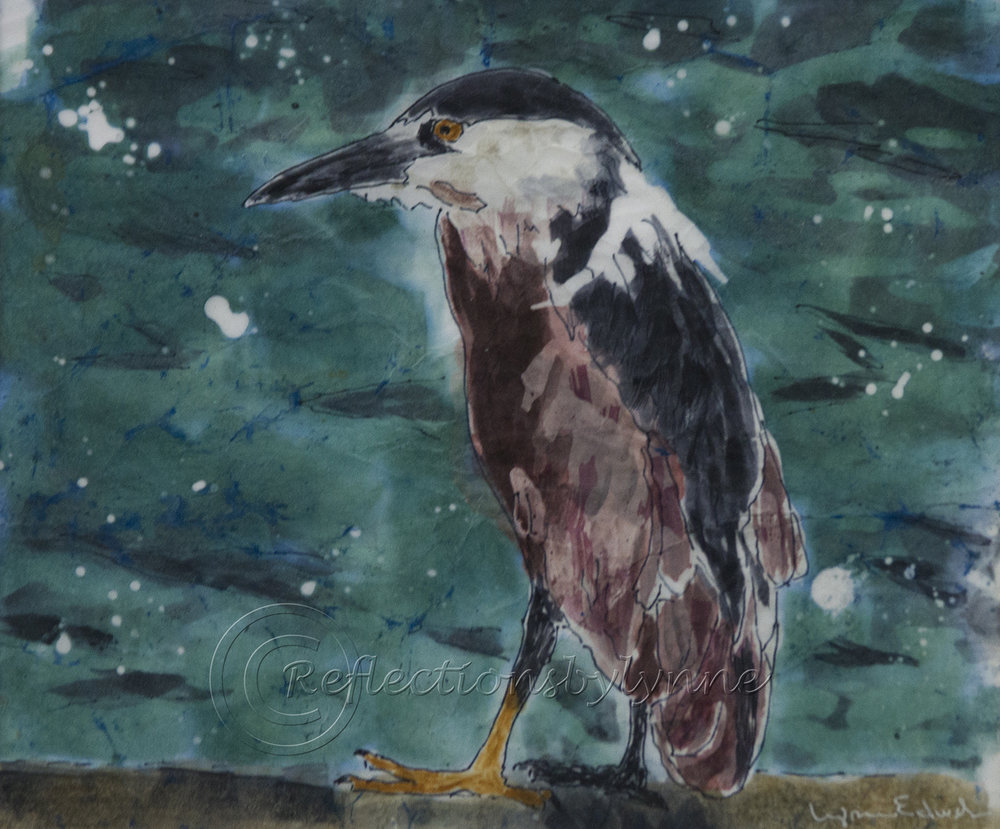 Edwards_Night Heron.jpg