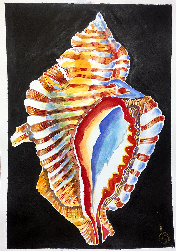 Lanzini_Conch Shell_web.jpg