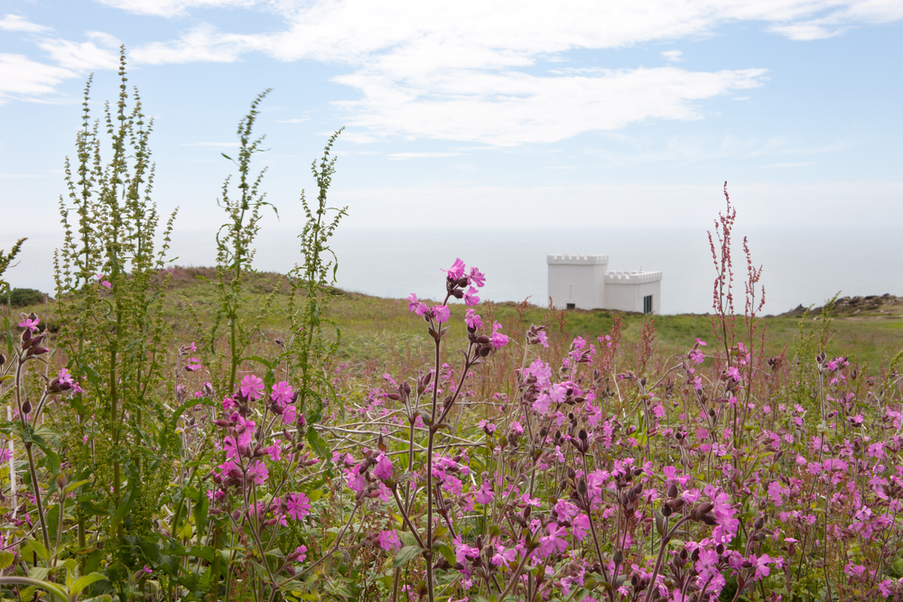 South Stack Nature Reserve, Wales, by Shaw & Shaw