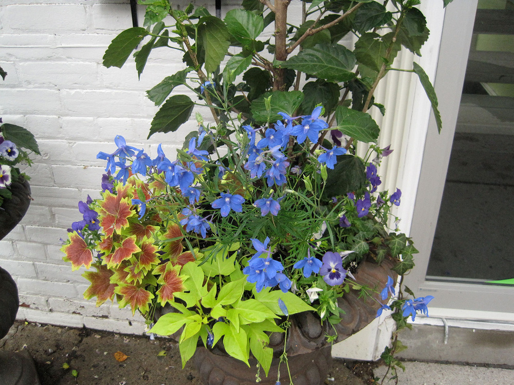 Summer-Containers---06.jpg