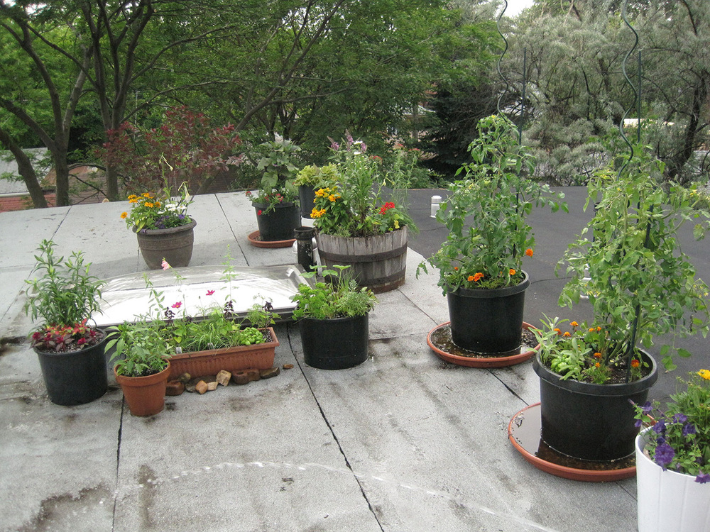 Summer-Containers---09.jpg