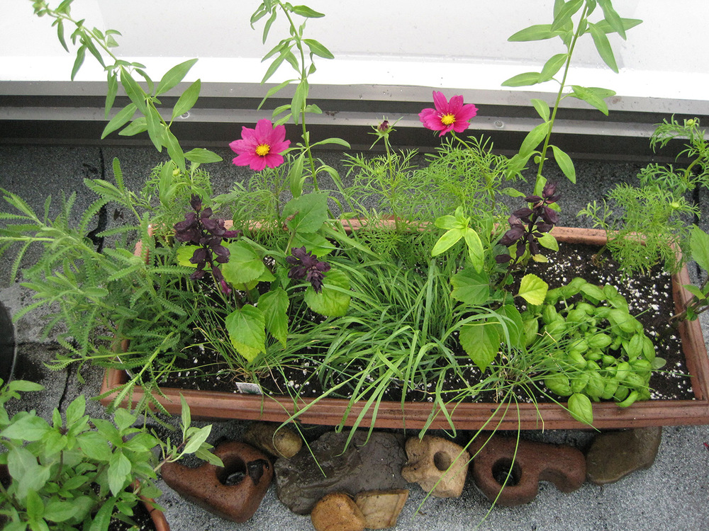 Summer-Containers---10.jpg