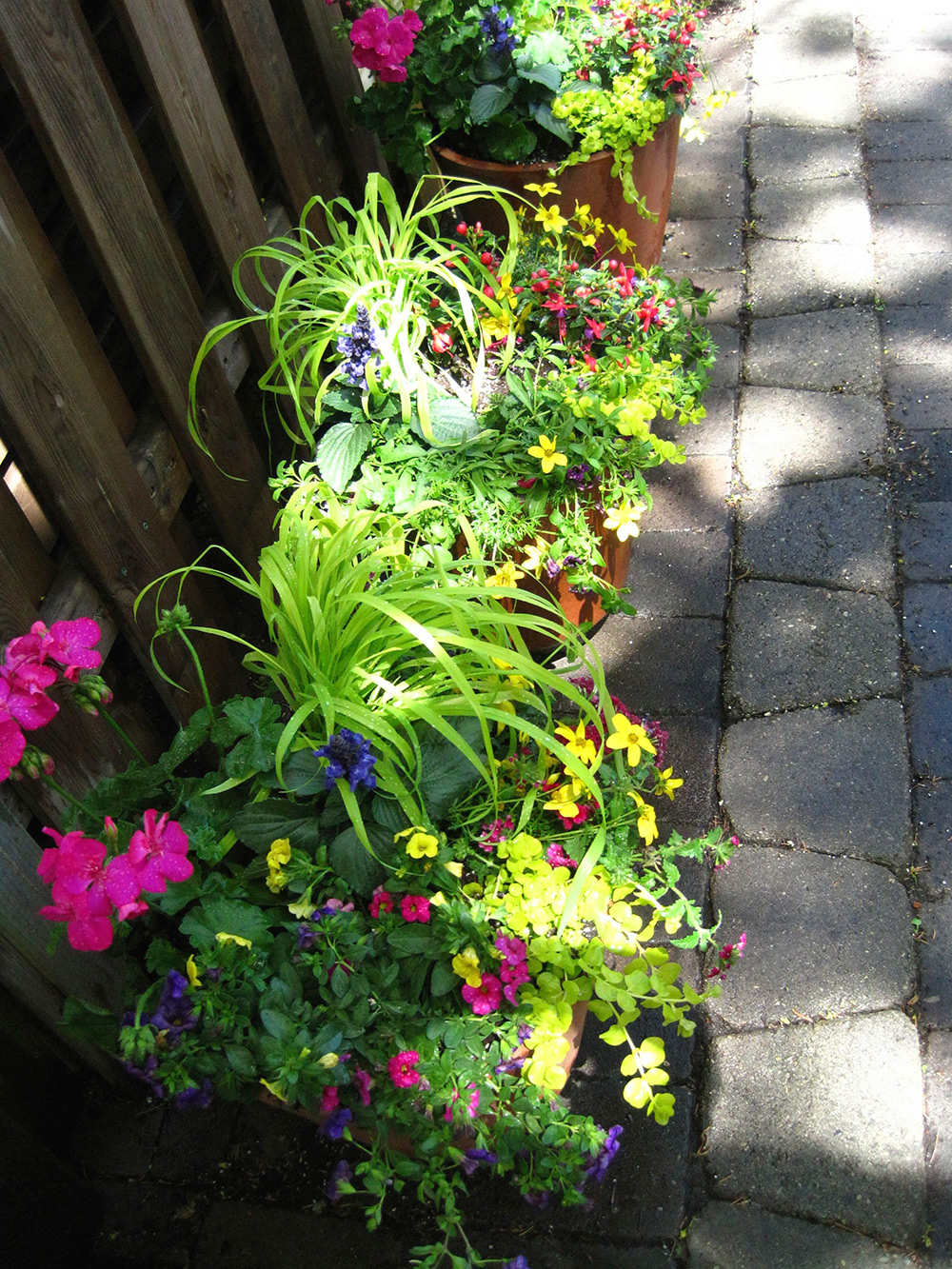 Summer-Containers---16.jpg