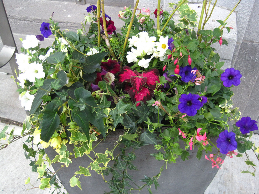 Summer-Containers---17.jpg