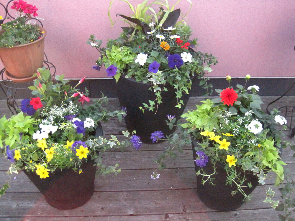 Summer-Containers---19.jpg