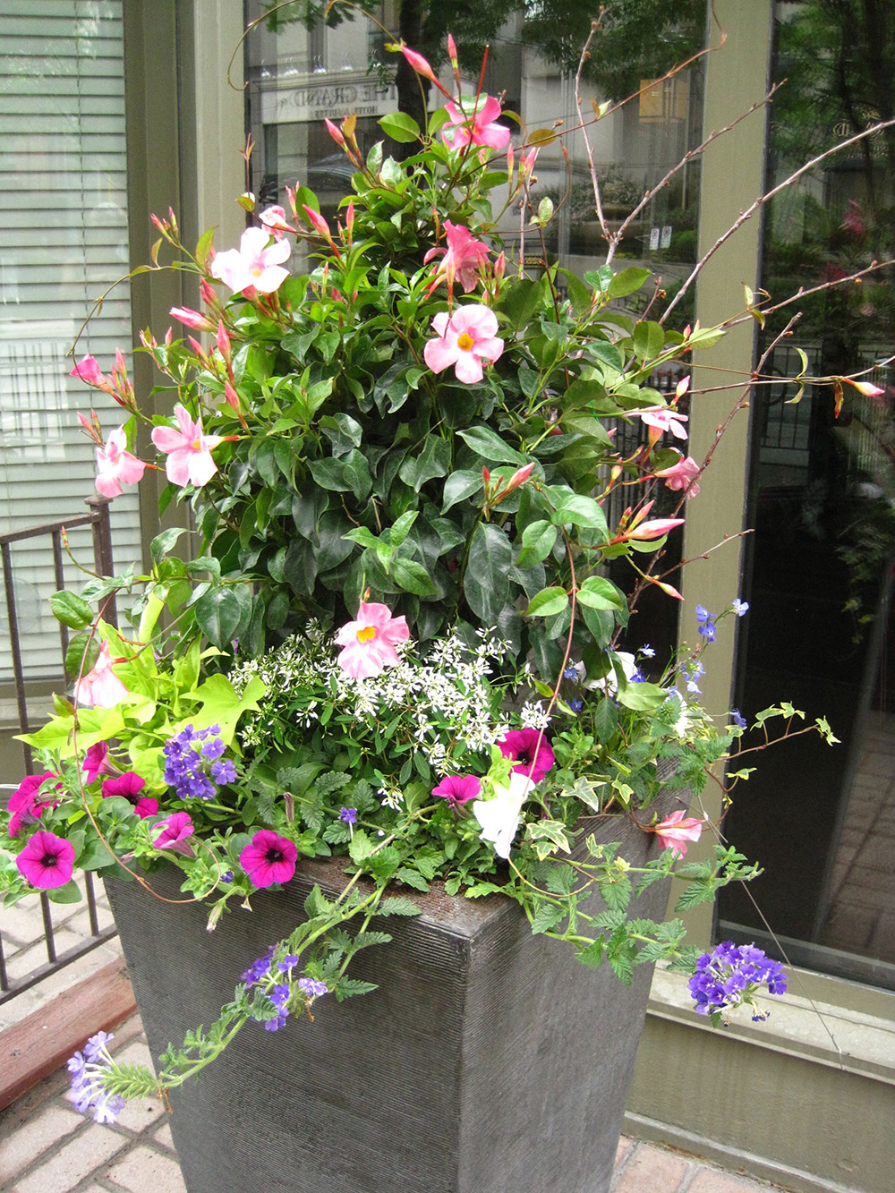 Summer-Containers---20.jpg