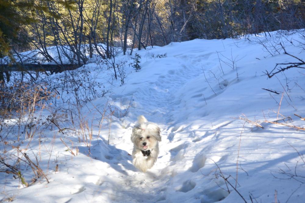 LaLa - walkies - last snow of the year - Bogus Basin, ID