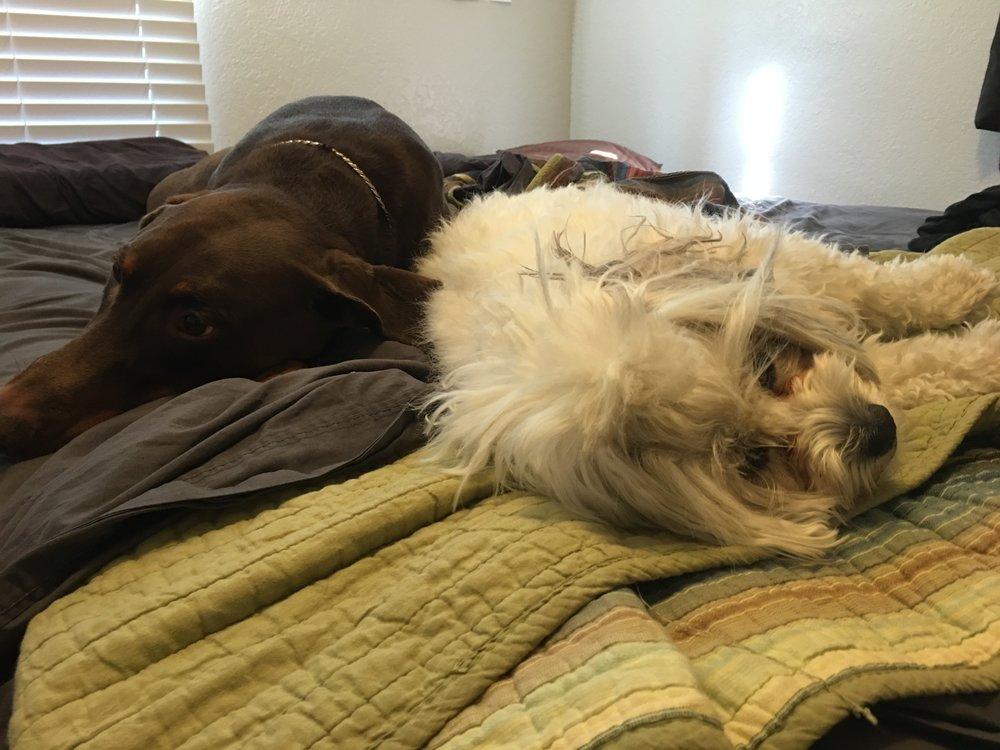 Sleepy Pups!