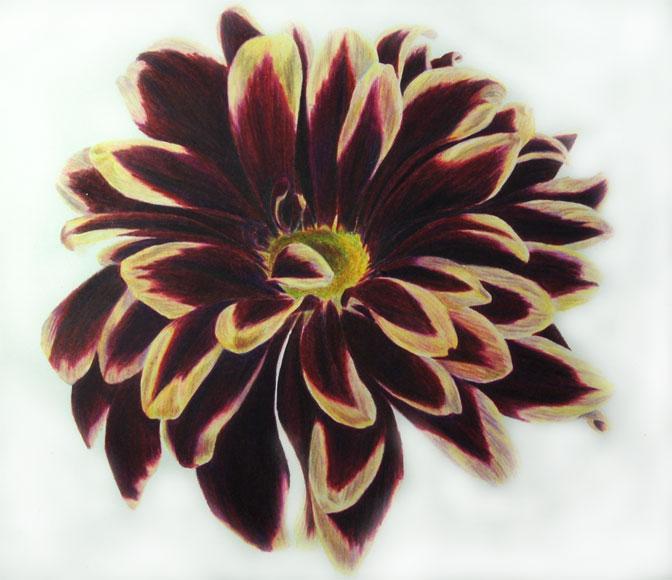 Botanical Study #1