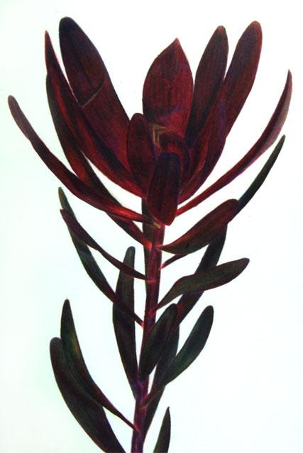Botanical Study #3