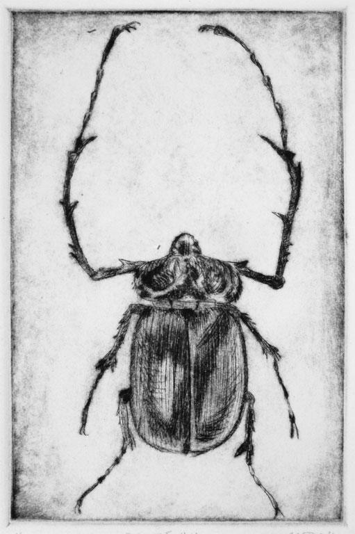Beetle #4
