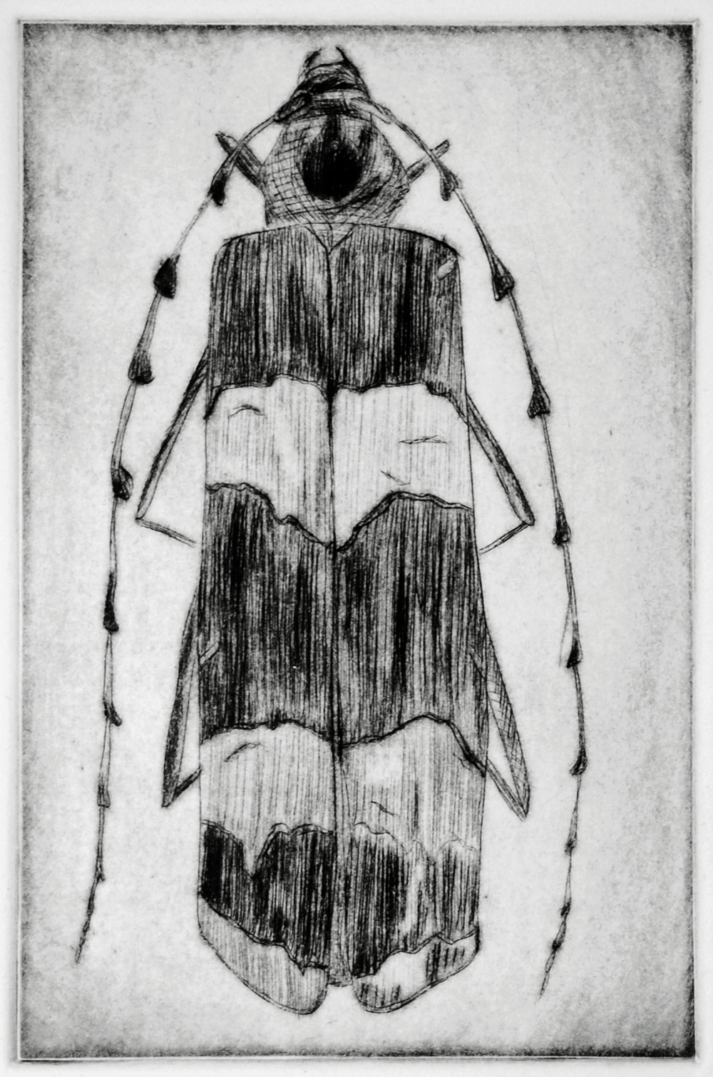 Beetle #5