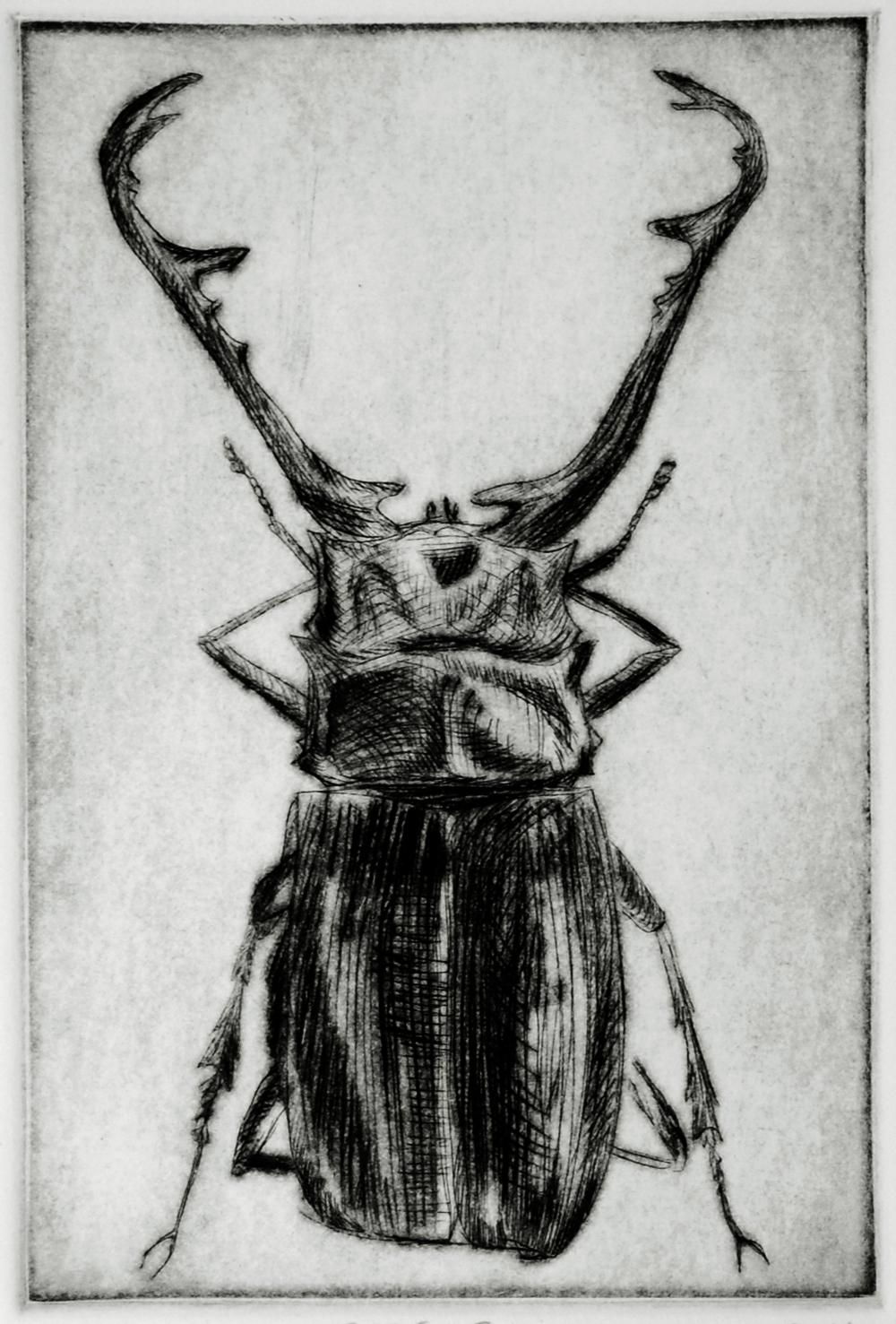 Beetle #6