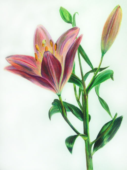 Colored Pencil  2013