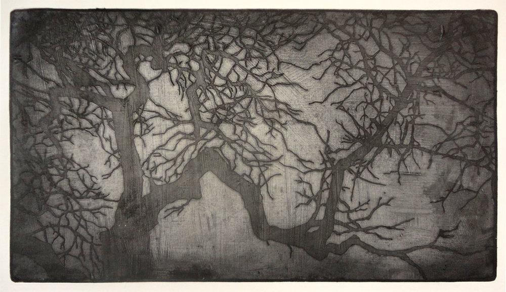 Tree #1