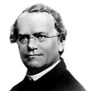 Gregor Mendel (1822-1844) Source: Wikimedia