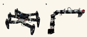 Cully et al.1 have designed an algorithm that allows robots to develop strategies for overcoming the effects of damaged limbs. Two robots were used: a, a hexapod (width 50 centimeters); b, a robotic arm (length 62 cm). Antoine Cully/UPMC