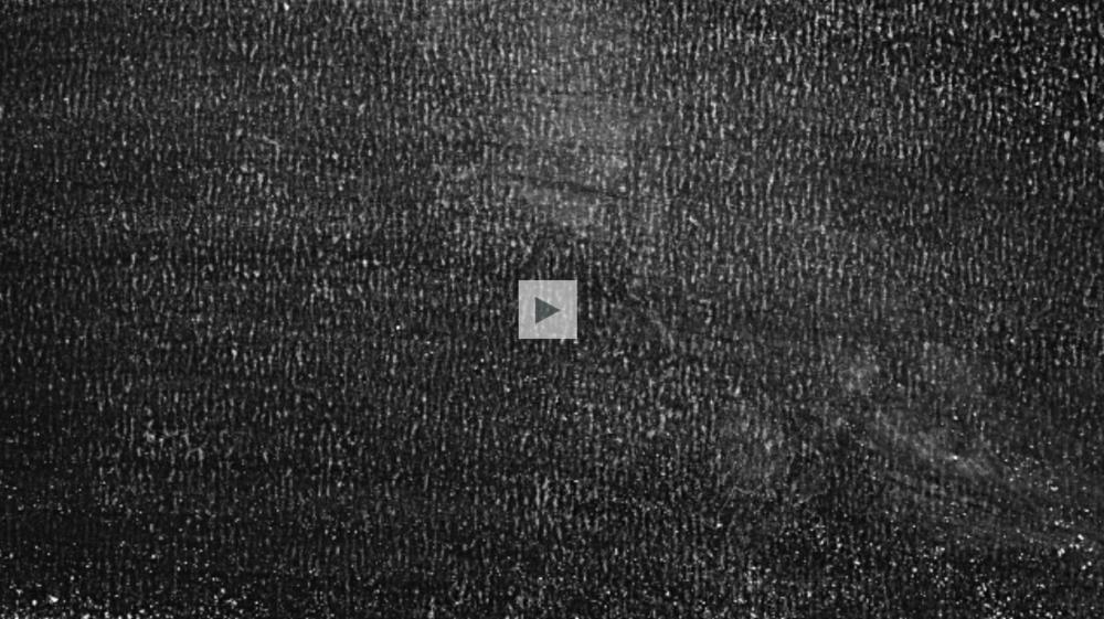 Screen Shot 2018-10-19 at 12.44.17 PM.png