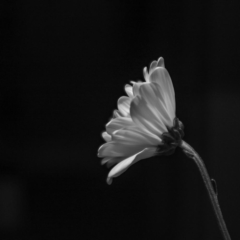 Random Photos-2