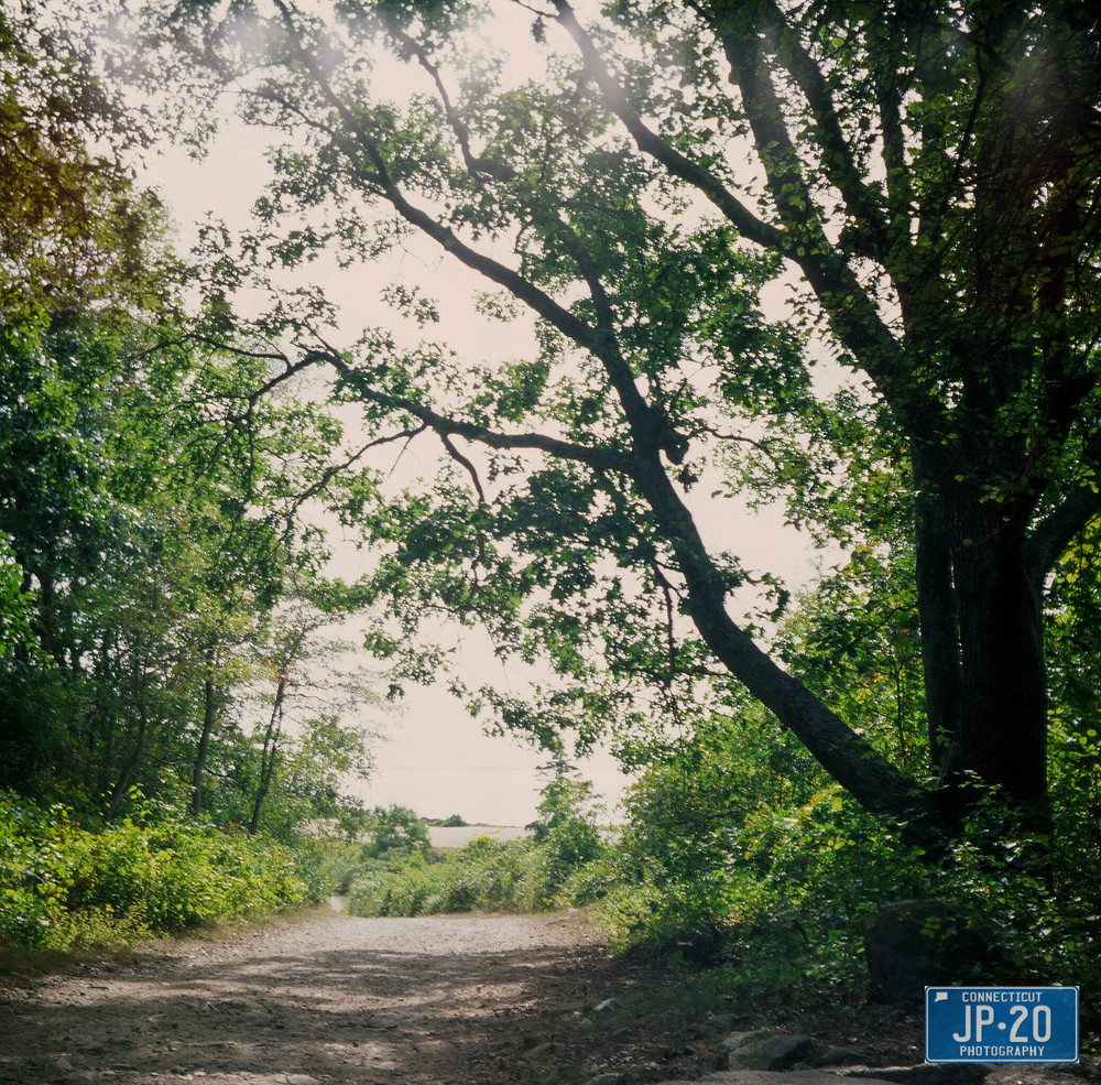 Photographed with my Lubitel 120 film camera  Click on the photo to see the gallery