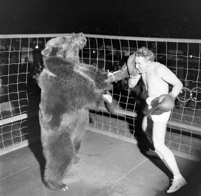 bear650.jpg